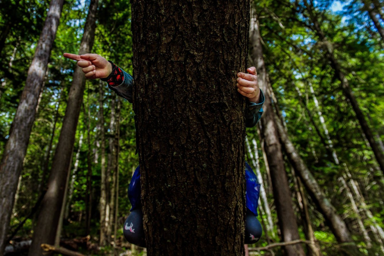 Girl climbs a tree during nelson bc family photo